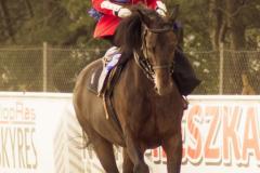 Art Moda żakiet do jazdy konnej
